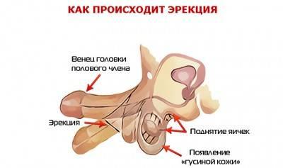 эректильная дисфункция симптомы лечение