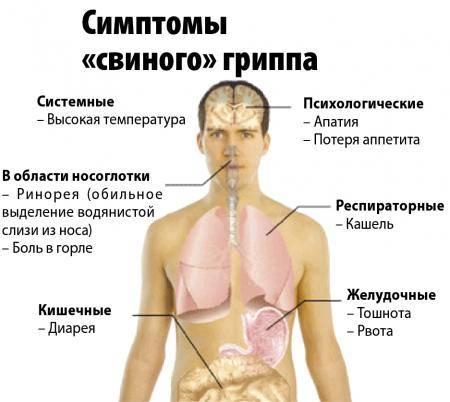 Причины свиного гриппа