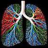 Бронхиолы - это тончашие продолжения бронхов, по которым воздух поступает непсоредственно к альвеолам легких