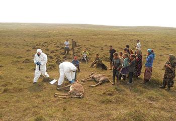 Сибирская язва - симптомы болезни, профилактика и лечение Сибирской язвы, причины заболевания и его диагностика на EUROLAB